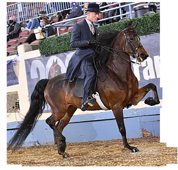 Kobylar Show Horses